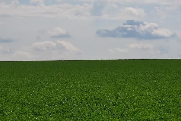 Picture for Expert: If You Want To Keep Your Alfalfa, Now Is Not The Time To Cut It