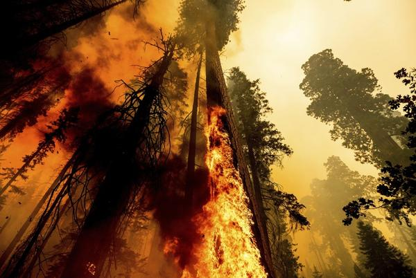 Picture for Photos: Windy fire continues to burn along the Trail of 100 Giants in Sequoia National Forest