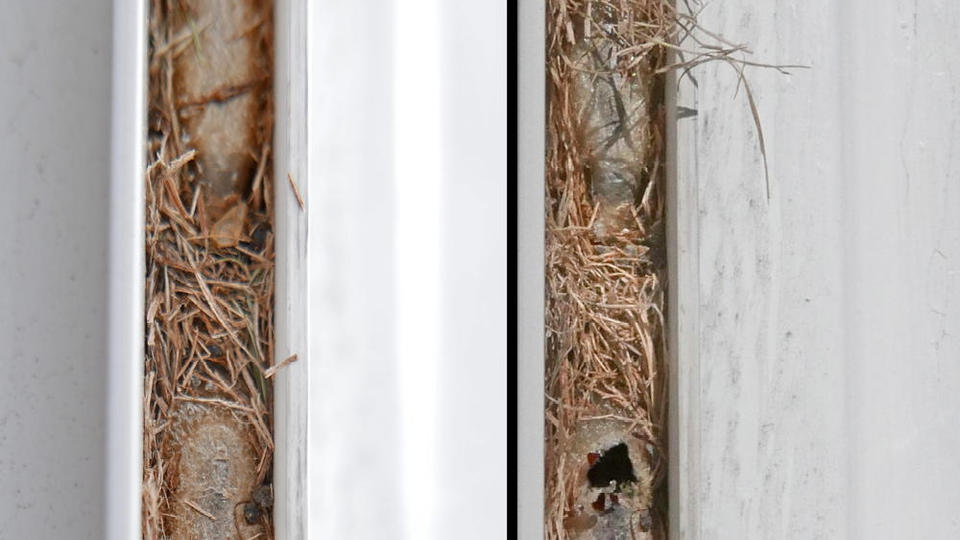 Picture for Do You Have Straw Between Your Window Screens and Where They Slide Out?