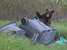Picture for 'It's not a bear problem; it's a human problem'