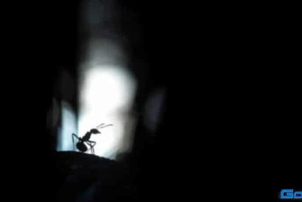 Picture for Mango-Ice Photography – Red forest ants in silhouette