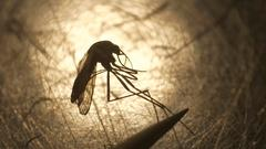 Cover for Camden man who tested positive for West Nile virus dies