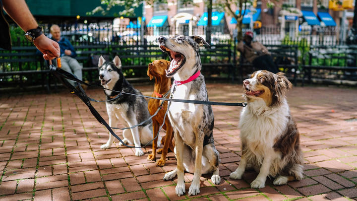 """Cover for Downtown Canton to hold """"Canton First Friday, To the Dogs"""" this September"""