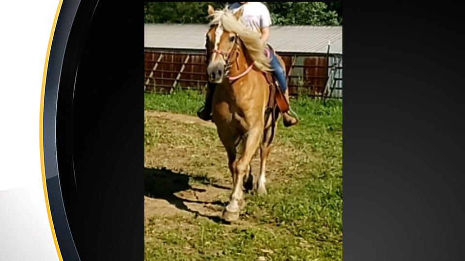 Picture for Police Investigate Theft Of 14-Year-Old Horse In Renfrew
