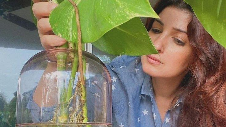 Picture for Twinkle Khanna loves to 'potter around' with her plants