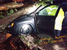 Picture for One injured after tree falls on vehicle in Buchanan County, power outages reported