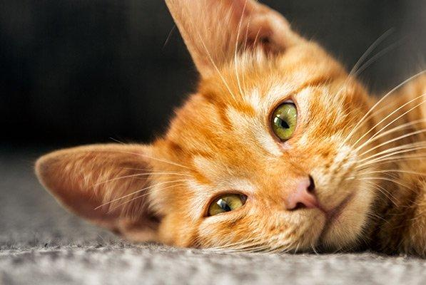 Picture for Ups and Downs of FIP in Cats; Sleeping with Your Dog; Rats and the Pandemic, all on WGN Radio