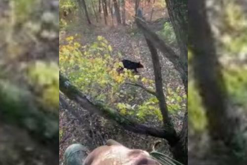 Picture for 'I feel a paw on my lap': Hunter bitten by bear while bow hunting
