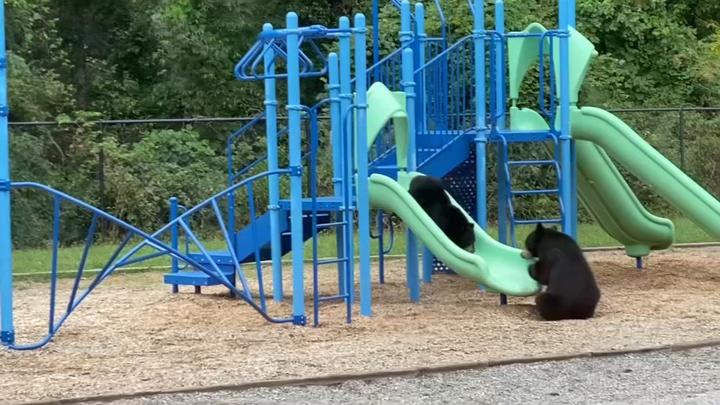 Cover for Mother bear and cub enjoy afternoon on school playground in North Carolina